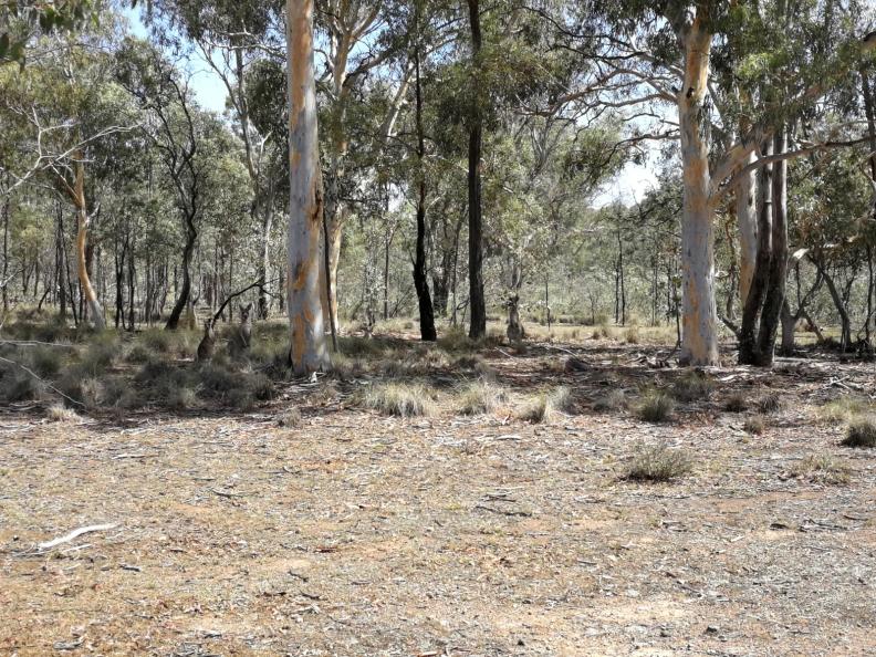 Mulligans Flat Nature Reserve, Canberra