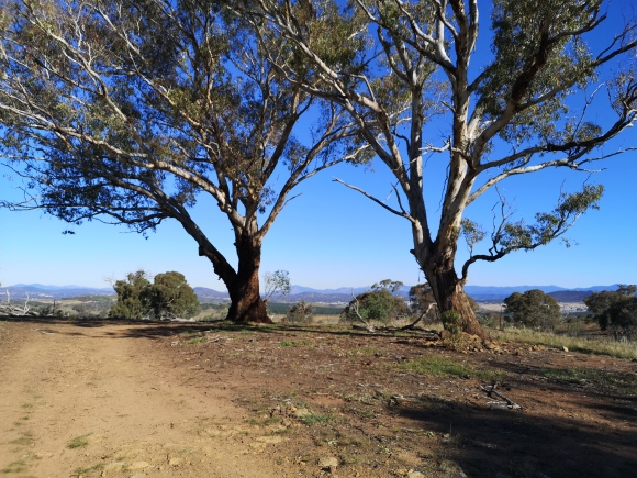 Tully Boundary Trail, The Pinnacle Nature Reserve, Hawker