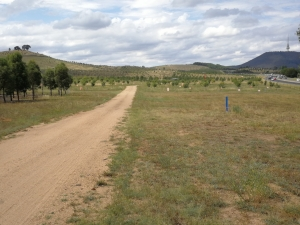Canberra Centenary Trail, River Road. Dairy Farmer Hill left and William Hovell Drive right, National Arboretum, Canberra.