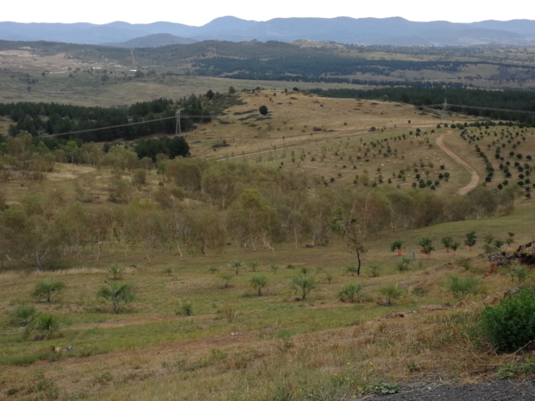 Denman Prospect and Brindabrella Ranges from National Arboretum, Canberra.
