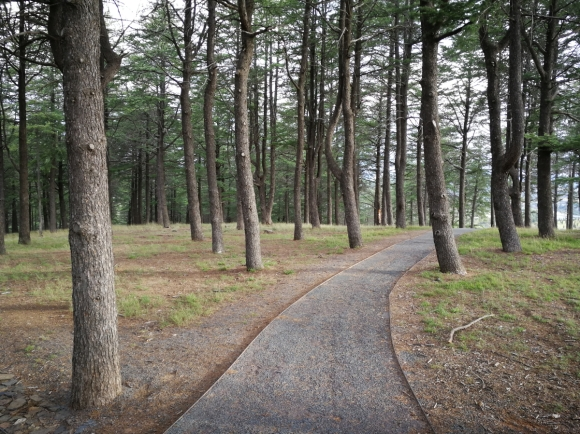 Gravel path, Himalayan Cedar Forest, National Arboretum, Canberra.