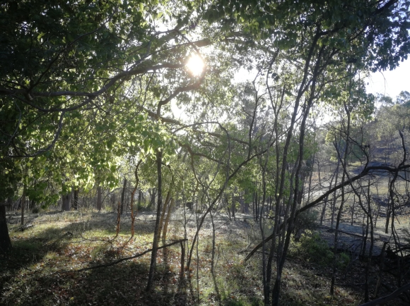 Mount Majura, Canberra Nature Park, Canberra