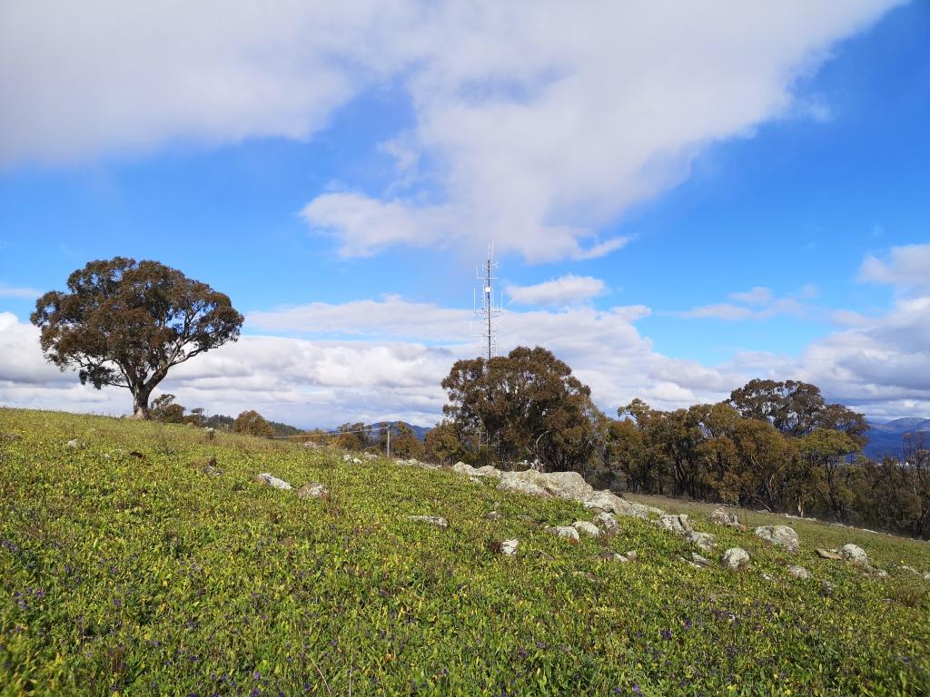 Long Gully Pine Plantation, Isaacs Ridge