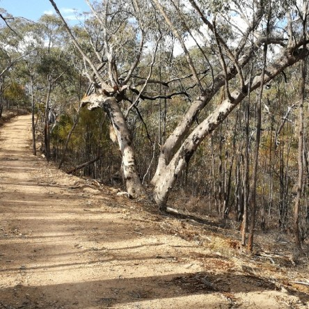 Denman Prospect Forest loop, Molonglo Valley